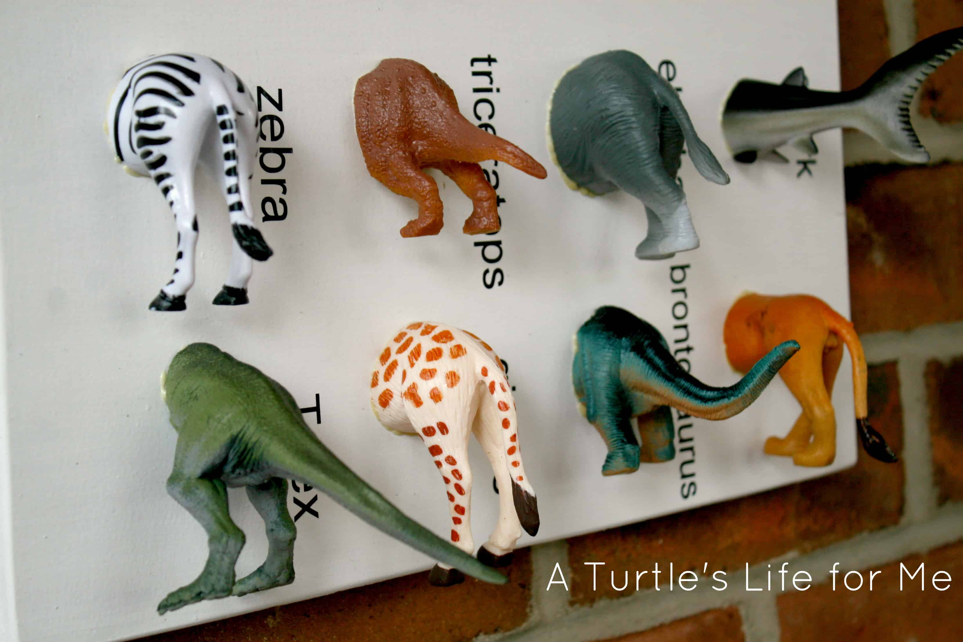 Animal specimen art a turtle 39 s life for me for Easy diy gifts for boys