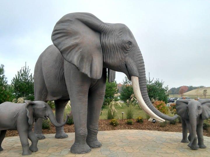 Kalahari elephants outside