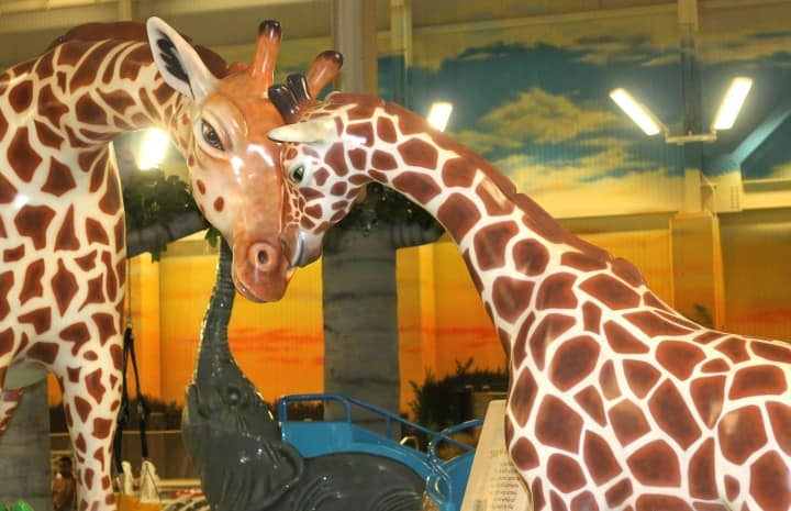 Kalahari girafffes