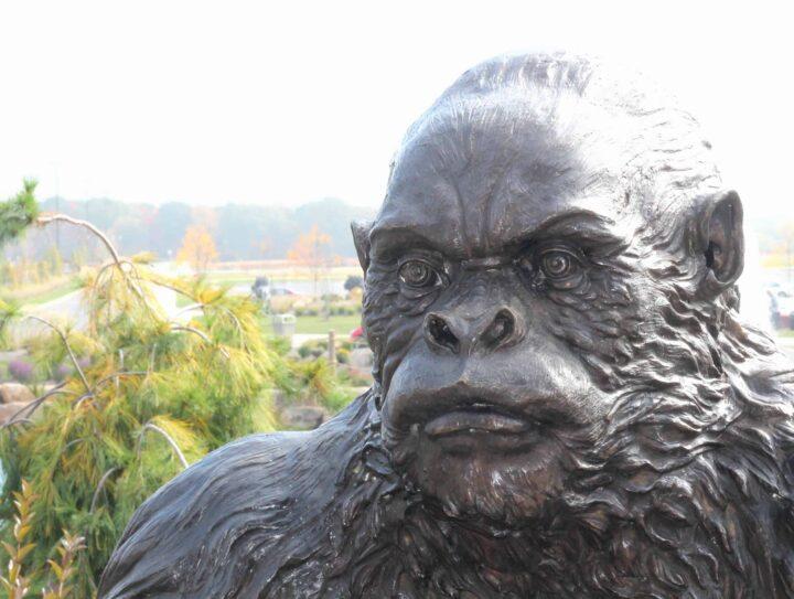 Kalahari gorilla