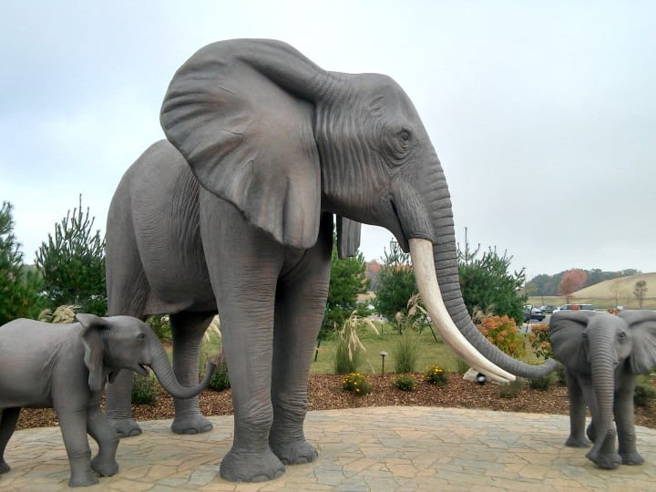 Kalahari elephants outside