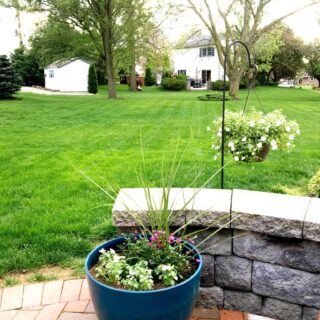 preparing your backyard for summer