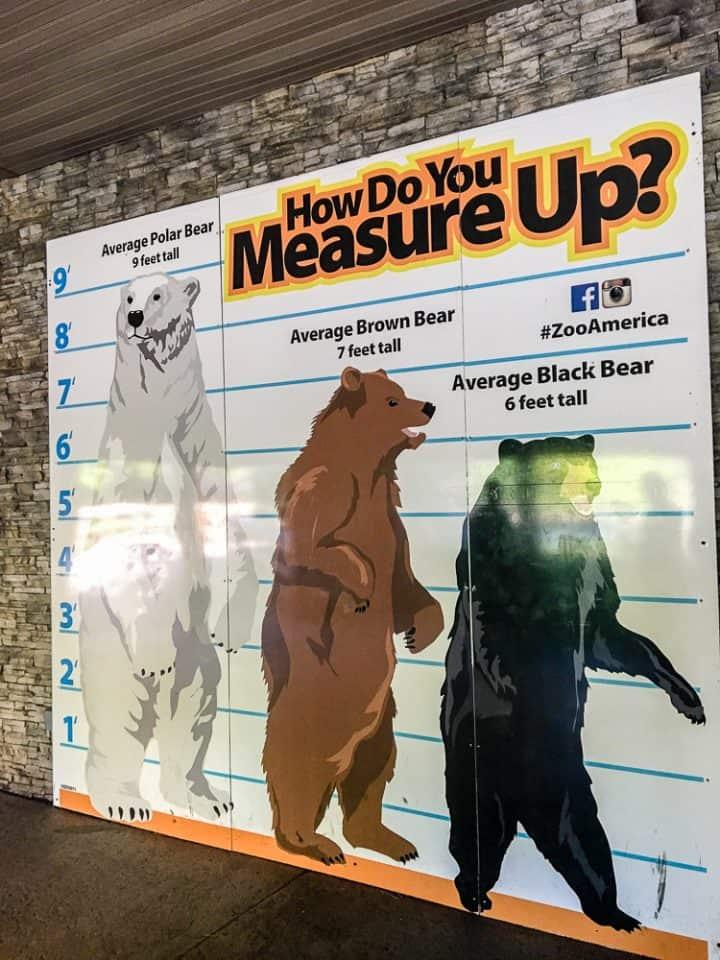 Hersheypark ZooAmerica bears