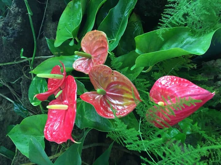 Phipps Conservatory plant exhibits