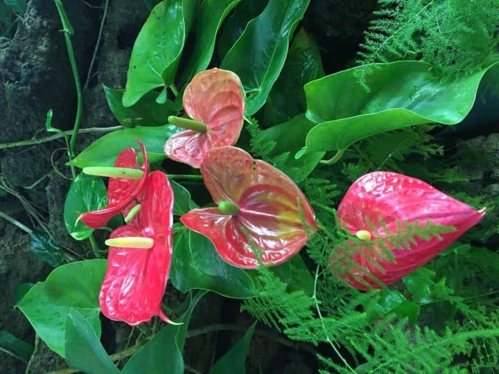 Phipps Conservatory plant exhibits