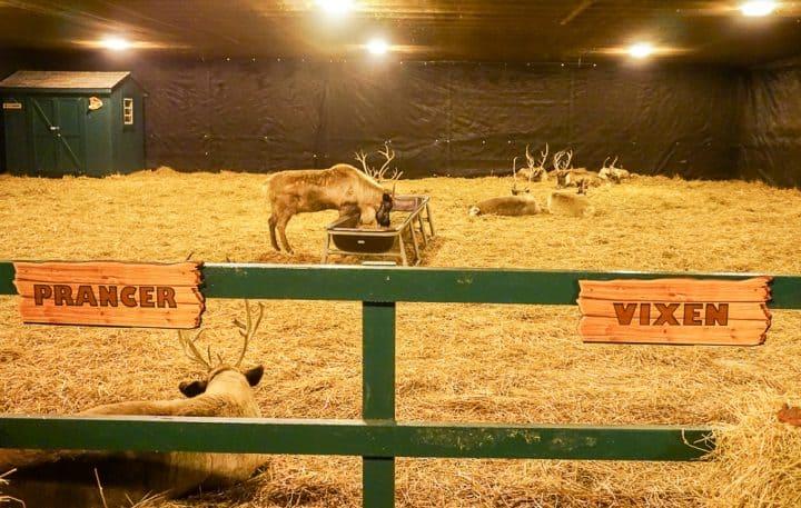 Christmas Candylane at Hersheypark live reindeer