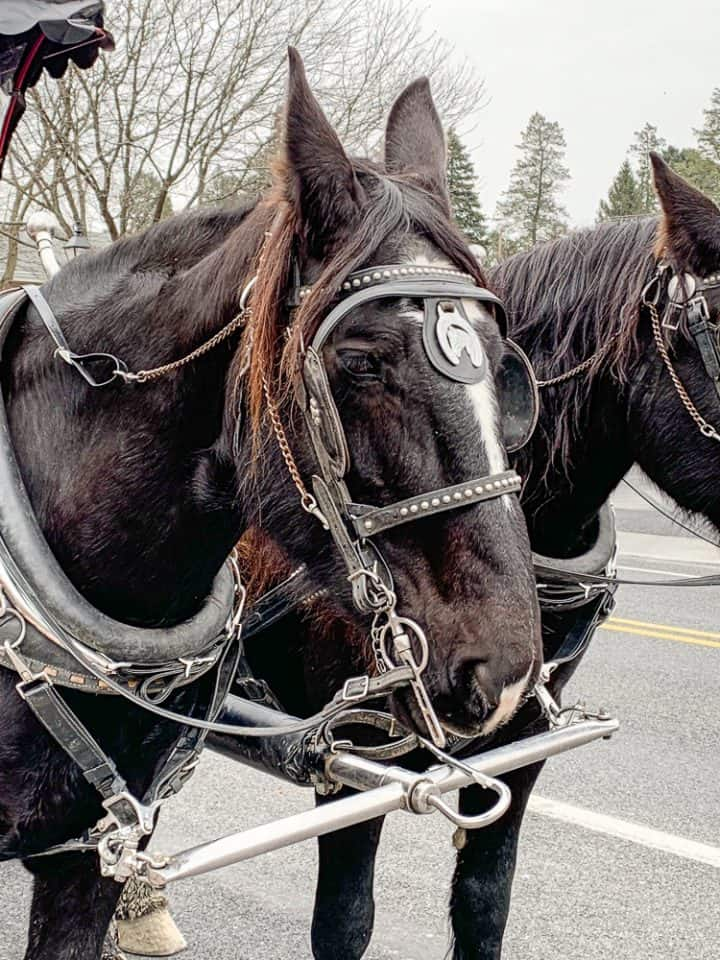 Gettysburg holiday wagon ride_