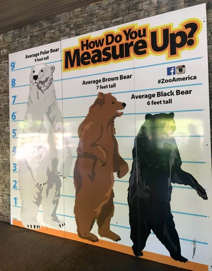 wall mural at ZooAmerica that shows how large different bears are